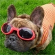 Lunettes solaires Doggles rouge